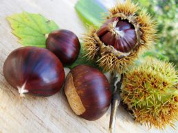 chestnuts-58410_960_720